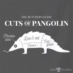 Pangolin